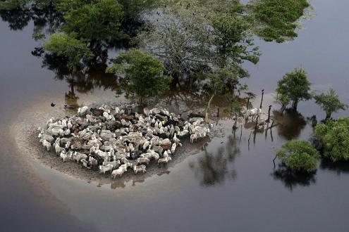 Hình ảnh ấn tượng 2014 (phần 2): Môi trường và biến đổi khí hậu
