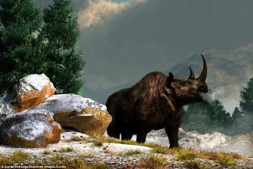 Phát hiện xác Tê giác có lông đã tuyệt chủng cách đây 10.000 năm