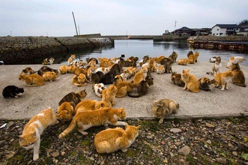 Đến thăm vương quốc của những chú mèo