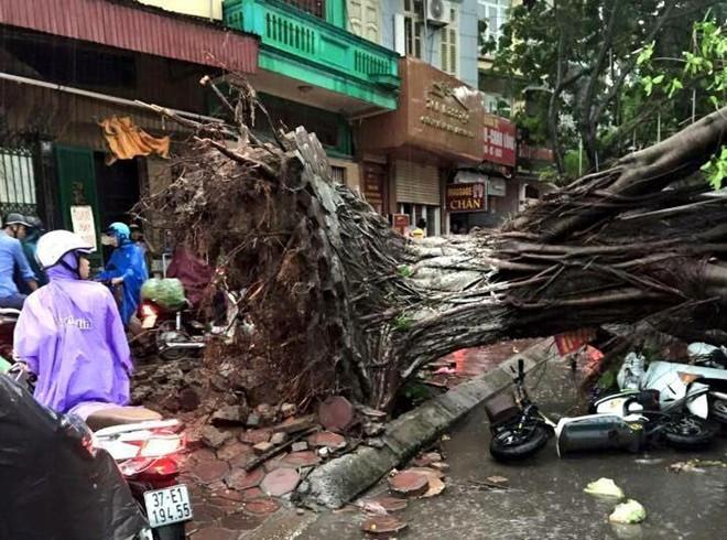 Bản tin 115 tuần từ 8 - 14/6: Hai người tử vong, hàng chục người nhập viện vì siêu dông tại Hà Nội