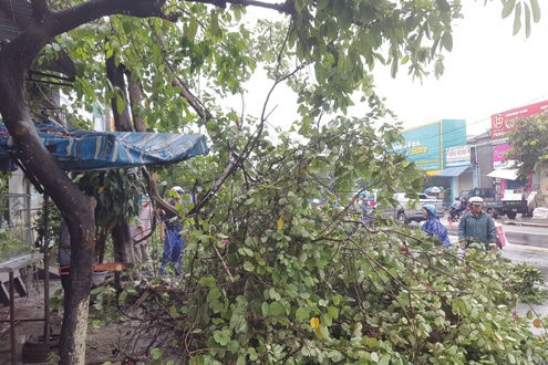 TT-Huế: Gió mạnh do áp thấp nhiệt đới, nhiều cây xanh bị quật ngã