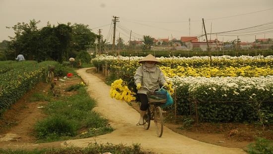 Hoài niệm về một làng trồng dơn trắng