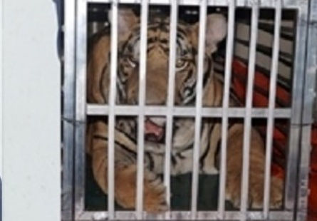 Thanh Hóa: Bắt đối tượng vận chuyển hổ sống đi tiêu thụ