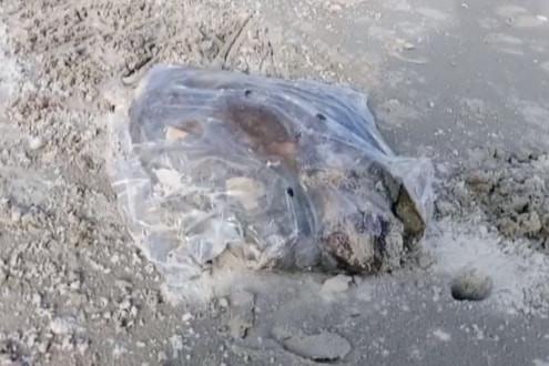 Xuất hiện nhiều túi nilon đựng thịt thối trôi dạt vào bờ biển Phú Lộc