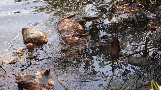Kinh hãi phát hiện hàng trăm con heo chết dịch ngập suối Cam Ly