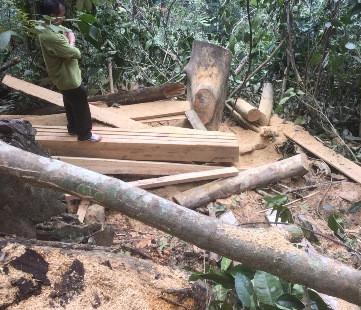 Bắt quả tang 1 đối tượng khai thác rừng đặc dụng trái phép