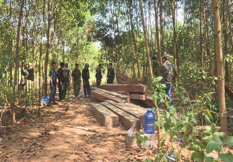 Công an tỉnh Đắk Lắk rút hồ sơ điều tra vụ phá rừng quy mô lớn
