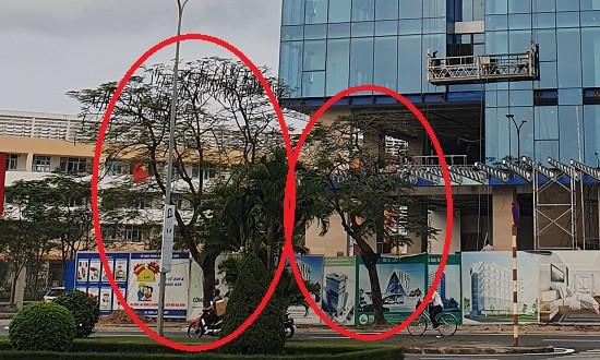 Vụ nhiều cây xanh bị chặt hạ ở Hải Phòng: Cơ quan chức năng xử lý có hời hợt?