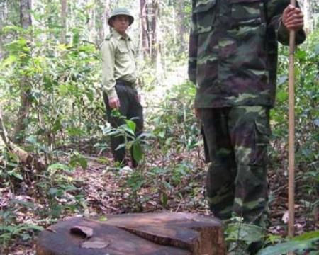 Cuộc chiến bảo vệ rừng trắc