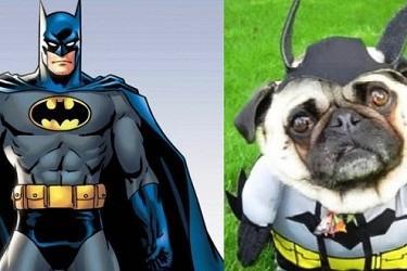 10 nhân vật màn ảnh nổi tiếng phiên bản... cún cưng