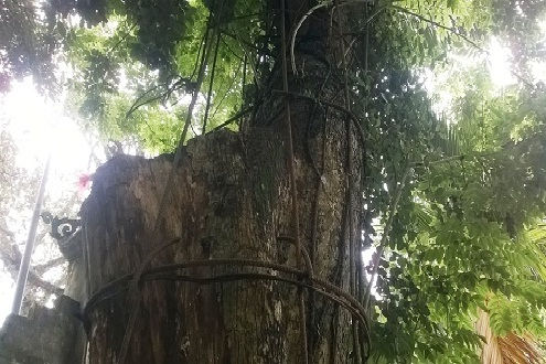 Tạm giữ hơn 2,5m3 gỗ sưa để đấu giá: Đúng hay sai?