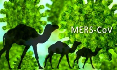Dịch MERS – CoV: Người dân không nên quá hoang mang