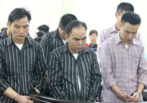 Nhóm trộm cây sưa ở Hà Nội lĩnh án