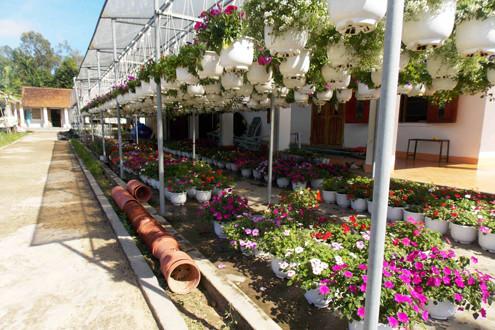 Chủ vườn tất bật chuẩn bị cho hoa Tết xuống phố