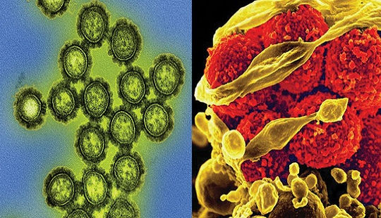 Thông tin lý thú: Vi khuẩn khác Virus thế nào?