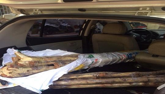 Hai mẹ con vận chuyển 15 khúc gỗ sưa bằng xe Kia Morning Van hoán cải