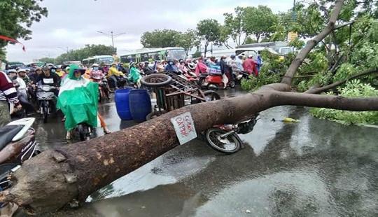 TP. HCM: Mưa dông làm cây xanh bật gốc đè vào người đi đường