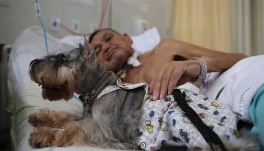 Brazil: Đưa chó vào bệnh viện hỗ trợ điều trị ung thư cho bệnh nhân