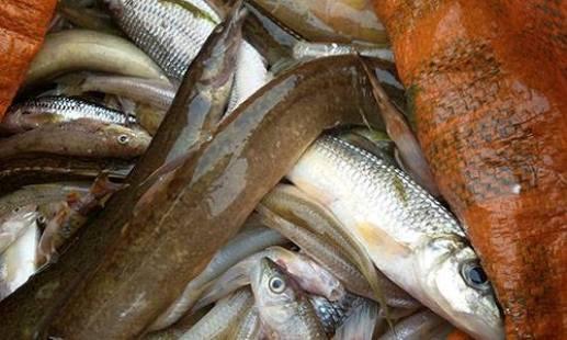 Thanh Hóa: Công an vào cuộc vụ cá chết bất thường trên sông Âm