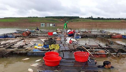 Gần 100 tấn cá chết bất thường ở Kon Tum
