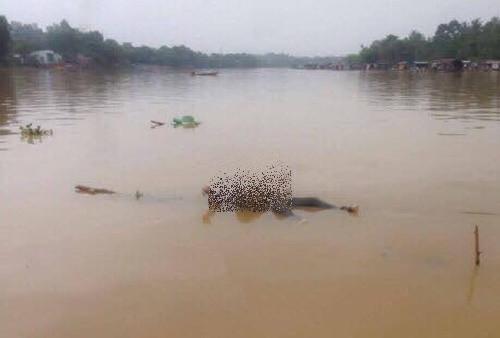Phát hiện thi thể 2 thanh niên trôi trên sông Đồng Nai