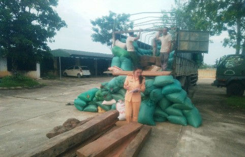 Ngụy trang bằng bao tải lúa bên ngoài để chở gỗ lậu