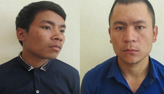 Khởi tố, tạm giam 2 bị can trộm 150 gốc sâm Ngọc Linh