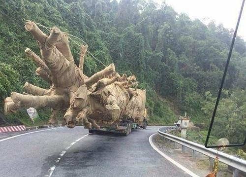 """Lẽ nào xe chở cây """"quái thú"""" có thuật tàng hình?"""