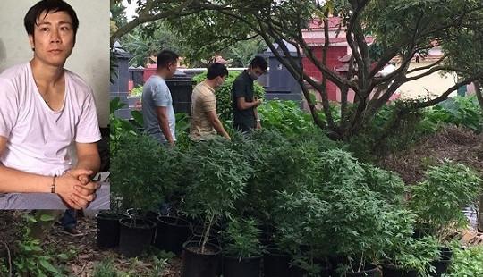 Cựu sinh viên đại học trồng cần sa, truyền đạo trái phép tại nhà