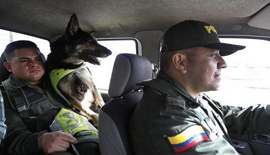 """Băng đảng ma túy khét tiếng treo thưởng 70.000 USD để """"truy giết"""" một chú chó nghiệp vụ"""