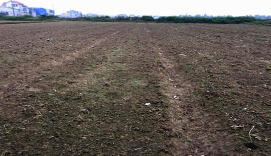 Hà Tĩnh: Nhiều người dân khốn đốn vì đất trồng lạc bị ngập úng