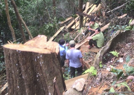 Lộ diện 5 vị trí khai thác gỗ trái phép trong Khu Bảo tồn thiên nhiên Ngọc Sơn- Ngổ Luông