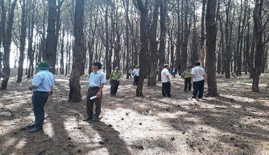 """Phó Chủ tịch tỉnh Gia Lai đi thị sát rừng thông cổ thụ bị """"bức tử"""""""