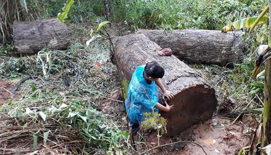 Xe chở gỗ bị lật một người tử vong