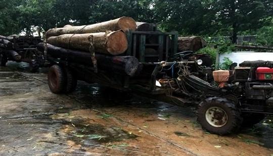 Bắt hai xe chở gỗ lậu không có biển kiểm soát