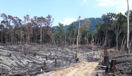 Hàng loạt sai phạm tại Ban Quản lý rừng phòng hộ Ia Rsai
