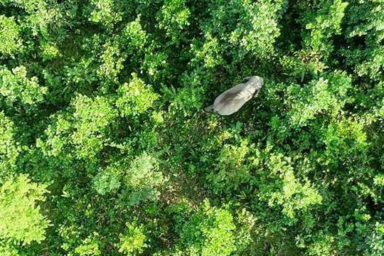 Ấn Độ: Con voi mang tên trùm khủng bố Laden tấn công dân làng, 5 người thiệt mạng