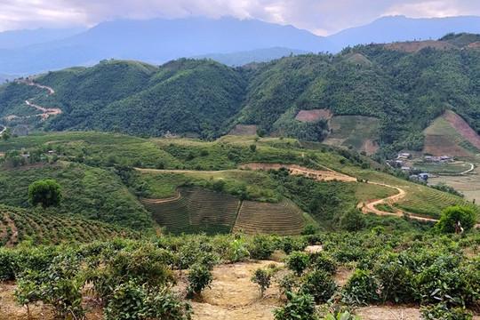 Lai Châu: Đất của tỉnh giao cho công ty trồng rừng bị đem bán