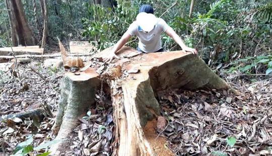 Tỉnh Gia Lai chỉ đạo khẩn vụ phá rừng ở huyện Kông Chro
