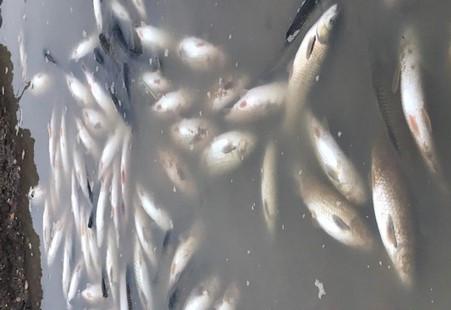 Thanh Hóa: Công an vào cuộc điều tra vụ cá chết bất thường trên sông Chu