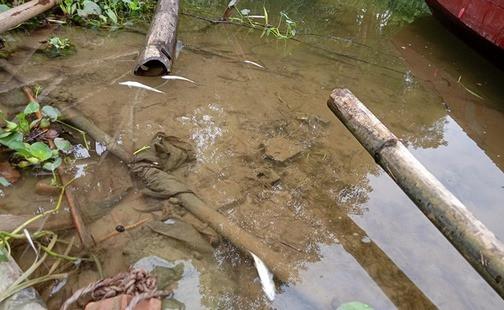 Cá chết bất thường trên sông Mã