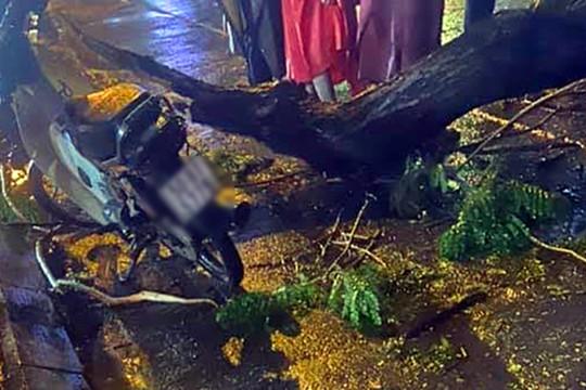 Nhánh cây cổ thụ gãy do mưa lớn, đè chết 1 người đi đường