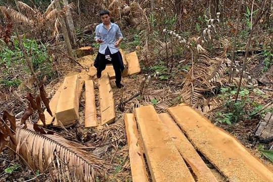 Rừng ở Ban Quản lý rừng phòng hộ Đăk Đoa liên tiếp bị xâm hại