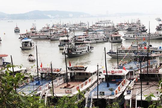 Quảng Ninh dừng cấp phép xuất bến tàu tham quan Vịnh Hạ Long