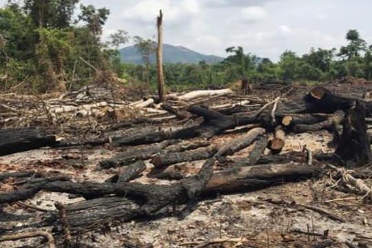 Khởi tố hai cán bộ thuộc Ban Quản lý rừng phòng hộ