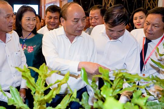 Thủ tướng: Xây dựng chiến lược phát triển cây mắc ca ở Việt Nam