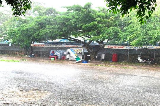 Đảo Lý Sơn thiệt hại nặng do bão số 6