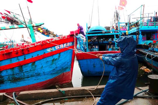 Tỉnh Quảng Ngãi cấm tàu thuyền ra khơi để tránh bão số 9