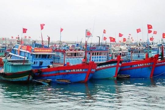 Tàu, thuyền của ngư dân Quảng Ngãi đã vào nơi neo đậu an toàn