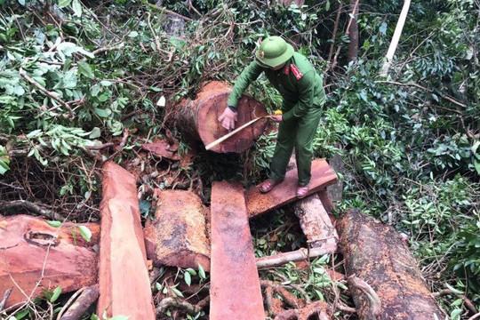 """Hơn 100 Công an """"cất lưới"""" chuyên án phá rừng"""